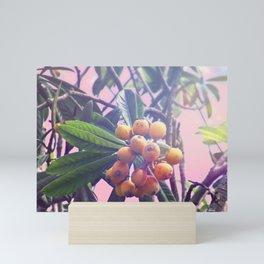 Loquat Mini Art Print
