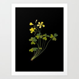 Oxalis Pes Capri Mary Delany Delicate Paper Flower Collage Black Background Floral Botanical Art Print