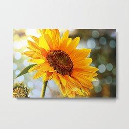 Radiant Sunflower Metal Print