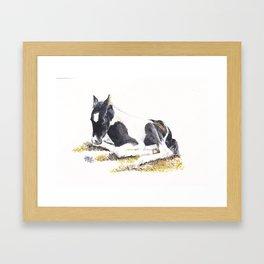 Foal Resting Framed Art Print