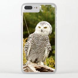 How Dare You Clear iPhone Case