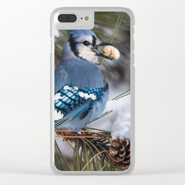 Christmas Blue Jay Clear iPhone Case