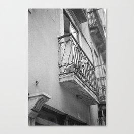 waiting dog Canvas Print