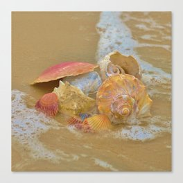 A collection Sea Shells by the Seashore with Sea Foam Canvas Print