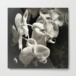 The poetry of reproduction Metal Print