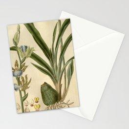 Flower 2748 zygopetalon Mackaii Mr Mackay s Zygopetalon10 Stationery Cards