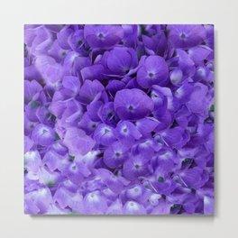 Amethyst  Hydrangea Flowers Garden Art Metal Print