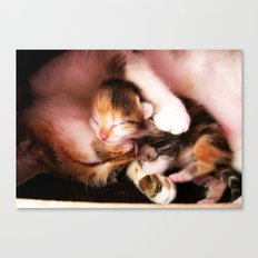 Cats hug Canvas Print