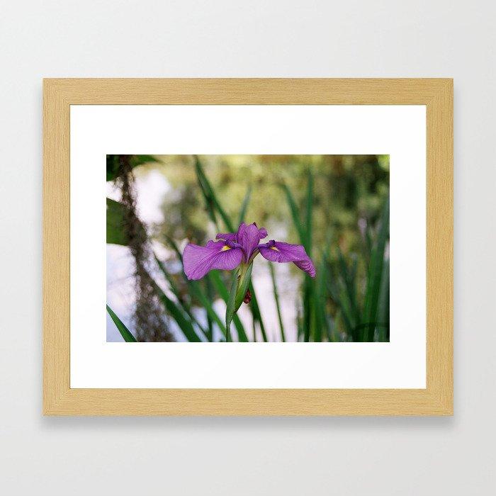 Purple Flower 2 Framed Art Print