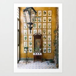 A Wall of Orchids, Merida, Mexico Art Print