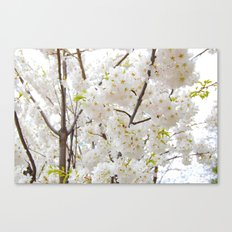Sakura blossom Canvas Print
