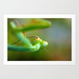 Praying Mantis 3 Art Print