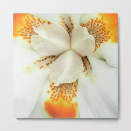 White Petals Metal Print