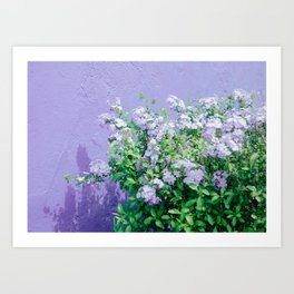 Purple flowers and the Wall Art Print