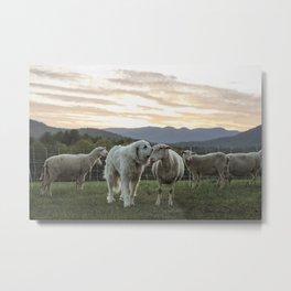 Remy and His Ewe Metal Print