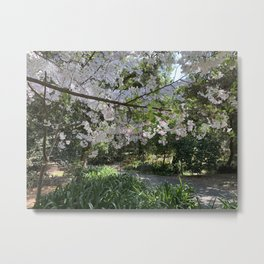 Spring - Cherry Blossom Metal Print