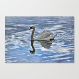 Proud mute swan Canvas Print
