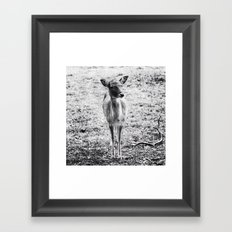 Young Deer Framed Art Print