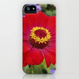 Red zinnia - blazing ring of fire iPhone Case