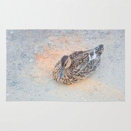 Mallard Duck resting Rug