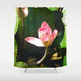 Hanalei Lotus, by Mandy Ramsey, Haines, AK Shower Curtain