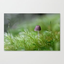 Do You Believe in Fairies? Canvas Print
