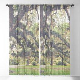 Live Oak Tree with Spanish Moss Sheer Curtain