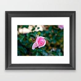 Pink Kiss Framed Art Print