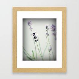 Memories of Provence Framed Art Print