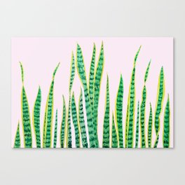 snake plant painting Canvas Print