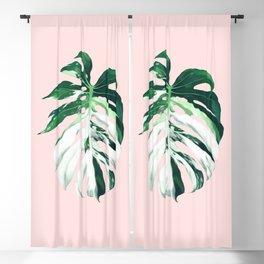 Monstera Albo Borsigiana in Pink Blackout Curtain
