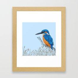 Kingfisher in reeds Framed Art Print