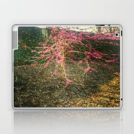 Chinese Red Bud  Laptop & iPad Skin