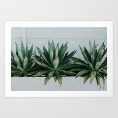 San Diego Succulents Art Print