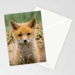 Coming Out Baby Red Fox Pup Wildlife Photograph Stationery Cards