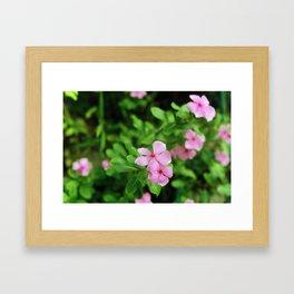 (piink)x(flowers) Framed Art Print