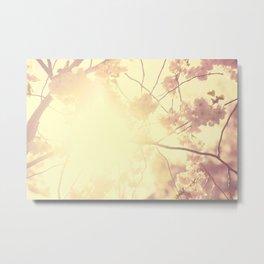 CHERRY SUNLIGHT Metal Print
