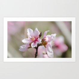 Peach Blossoms 7 Art Print