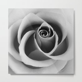 Rose Flower Close Up Black and White Floral Photography Metal Print