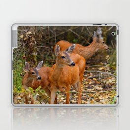A Trio of Blacktail Deer in the Forest Laptop & iPad Skin