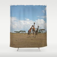 giraffes Shower Curtains featuring Giraffes by wendygray