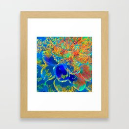 Zinnia Framed Art Print