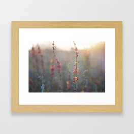 Wildflowers at Sunse Framed Art Print