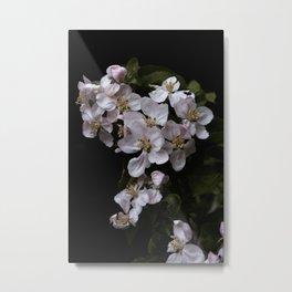 Beautiful Apple blossoms Metal Print