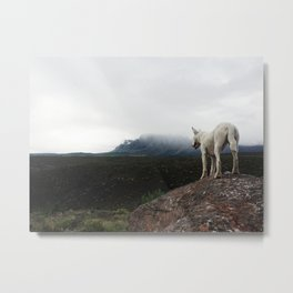 Bella On The Mountain Metal Print