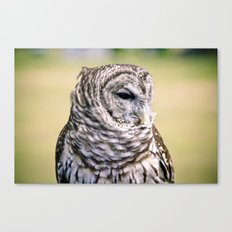 Shy Barred Owl Canvas Print