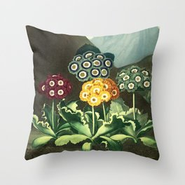 Group of Auriculas :  Temple of Flora Throw Pillow