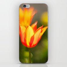 Red and yellow tulip iPhone & iPod Skin