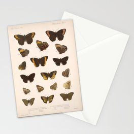 Vintage Scientific Hand Drawn Illustration Anatomy Of Butterfly Insect Patterns Biology Art Stationery Cards