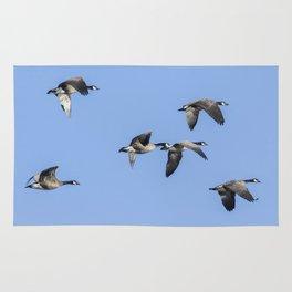 Six Dusky Canada Geese Flying Rug
